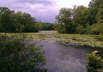 Teatown Lake Reserva...