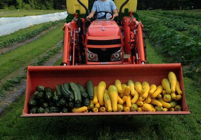 Davoren Farm
