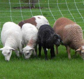Banbury Cross Farm