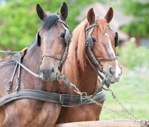 Hudson Valley Draft Horse Association Spring Plow