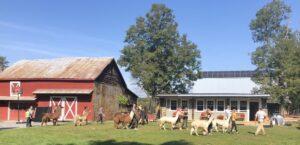 Clover Brooke Farm