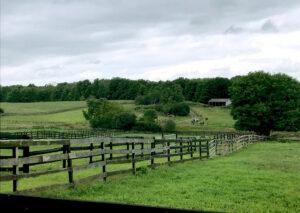 Granny Fox Farm