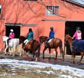 Saddle Brook Farm An...