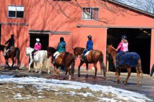 Saddle Brook Farm Animal Rescue