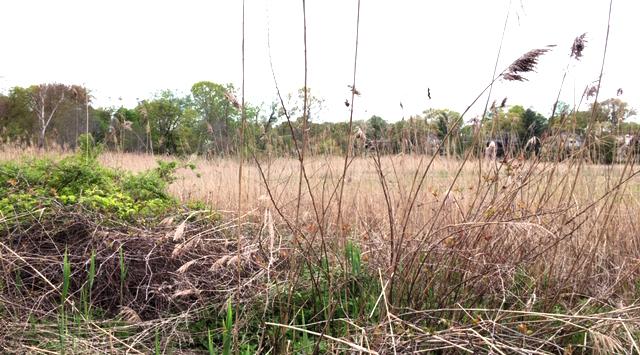 Otter Creek Preserve Is a Hidden Gem
