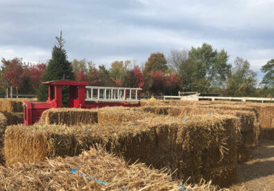 Manza Family Farm