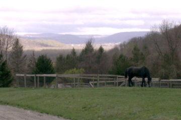 Enjoying the View at Inner Circle Farm