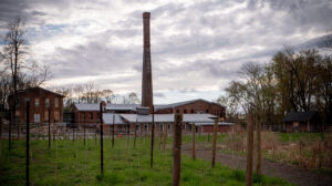 City Winery, Interview with Owner, Michael Dorf