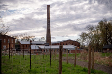 City Winery, An Interview With CEO, Michael Dorf