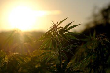 New York Opens the Door for Recreational Marijuana